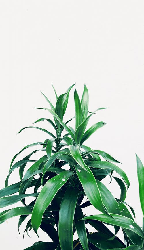 Photo of a Green Plant In a White Background