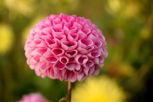 Free stock photo of nature, love, summer, garden