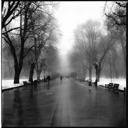 Monochrome Photo Of Misty Road