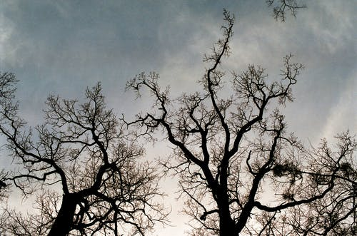 Leafless trees in forest against cloudy sky
