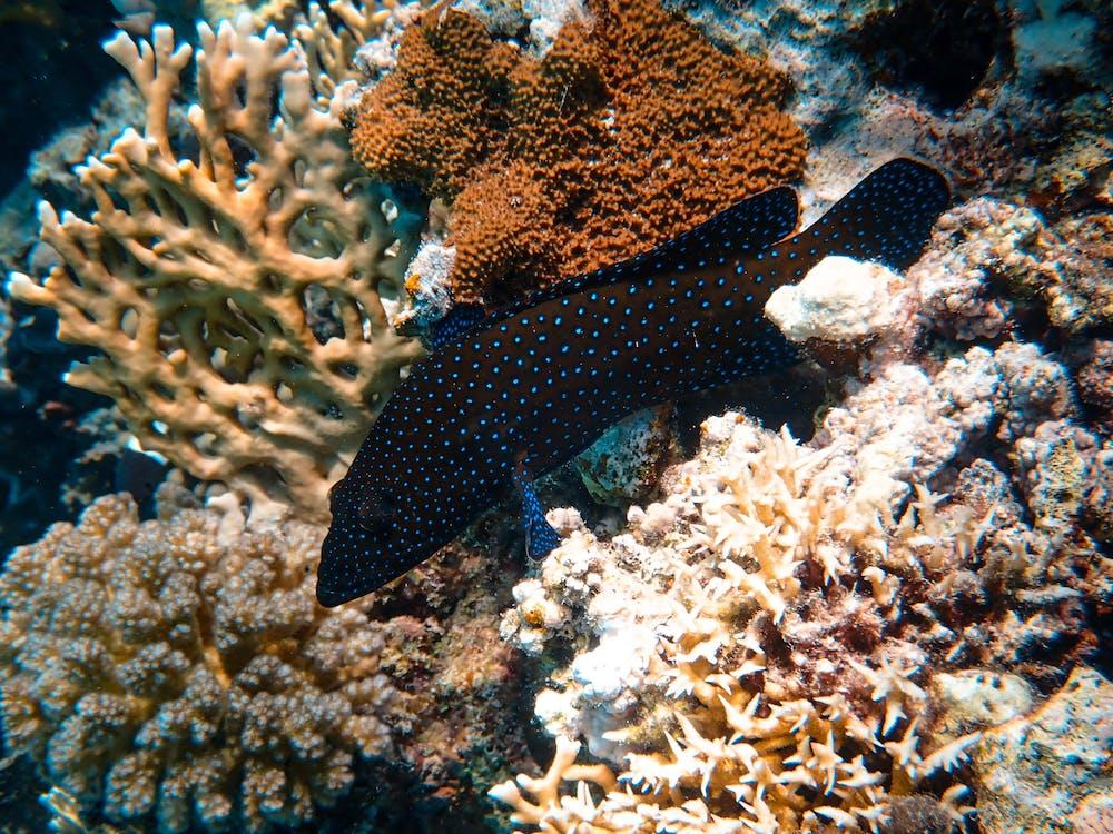 Photo Of Fish Near Corals