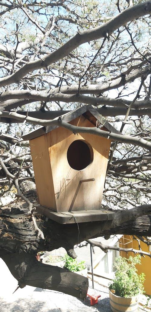 Free stock photo of bird, bird house