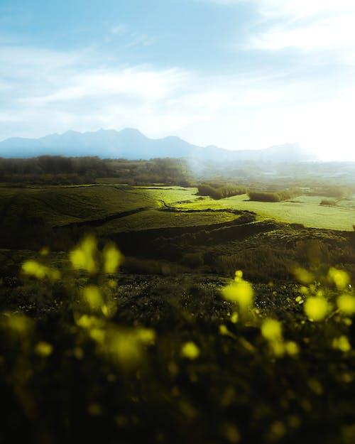 Безкоштовне стокове фото на тему «sintra, безтурботний, Долина»