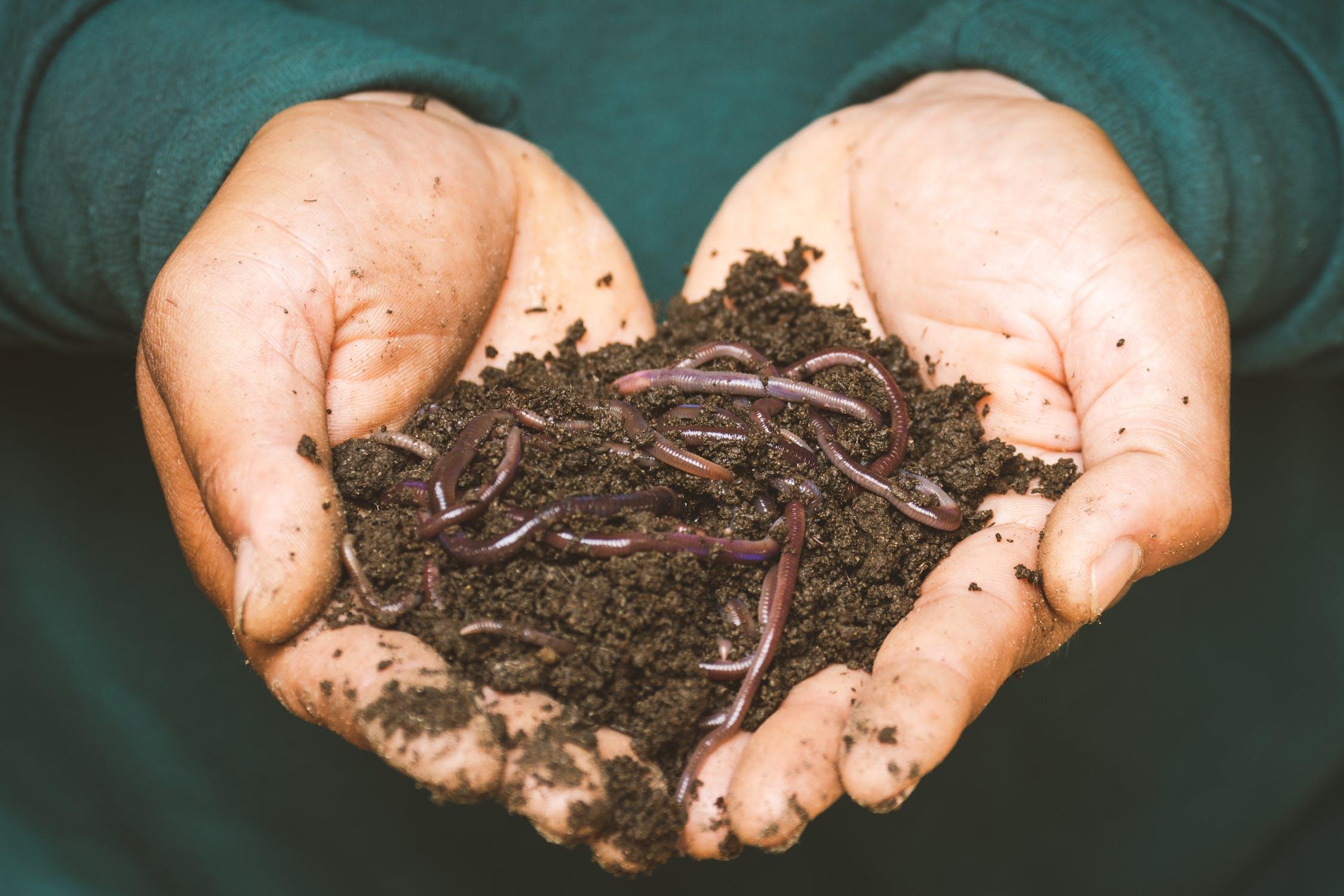 Bild zeigt Hände welche mit Regenwürmern gefüllte Erde halten