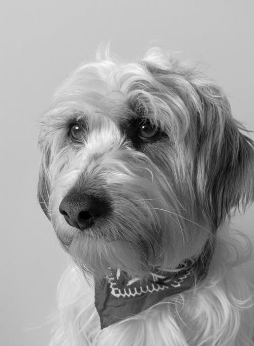 Monochrome Photo Of Dog