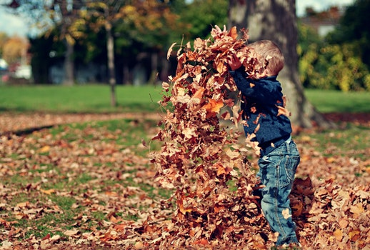 Boy Playing With Fall Leaves Outdoors