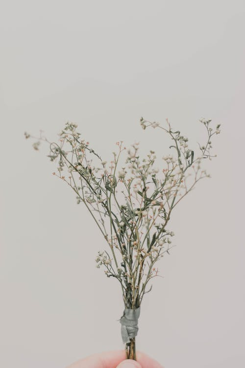 Δωρεάν στοκ φωτογραφιών με γκρι φόντο, κλαδί, κράτημα, λουλούδια