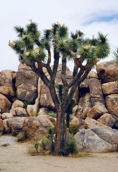 Free stock photo of desert, joshua tree, mountain rocks