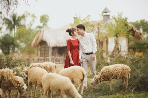 Romantic Couple Standing Near Sheeps