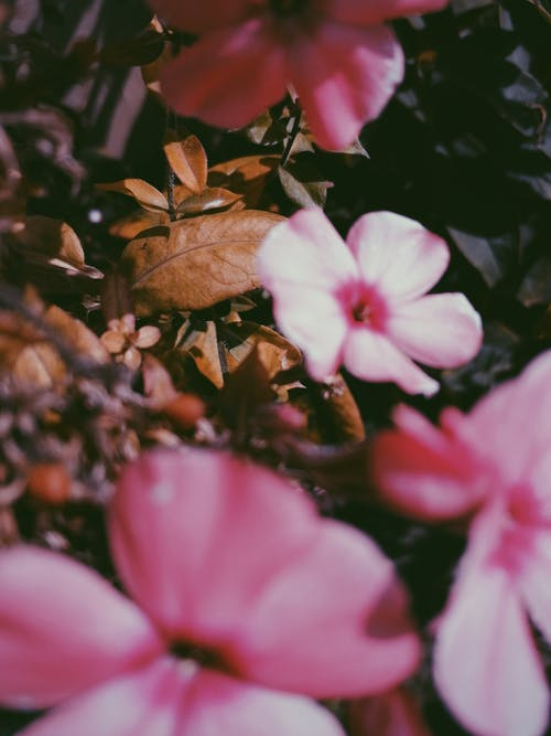 Free stock photo of beautiful flower, dry leaves, sunny