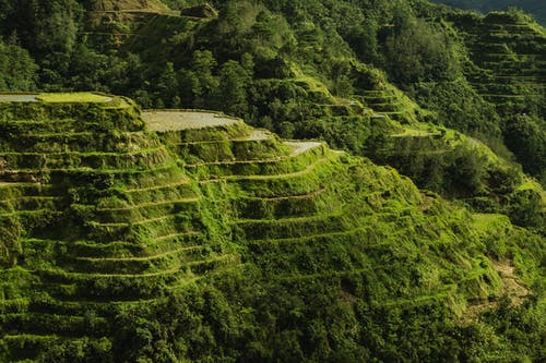 Scenic Photo Of Rice Terraces During Daytime