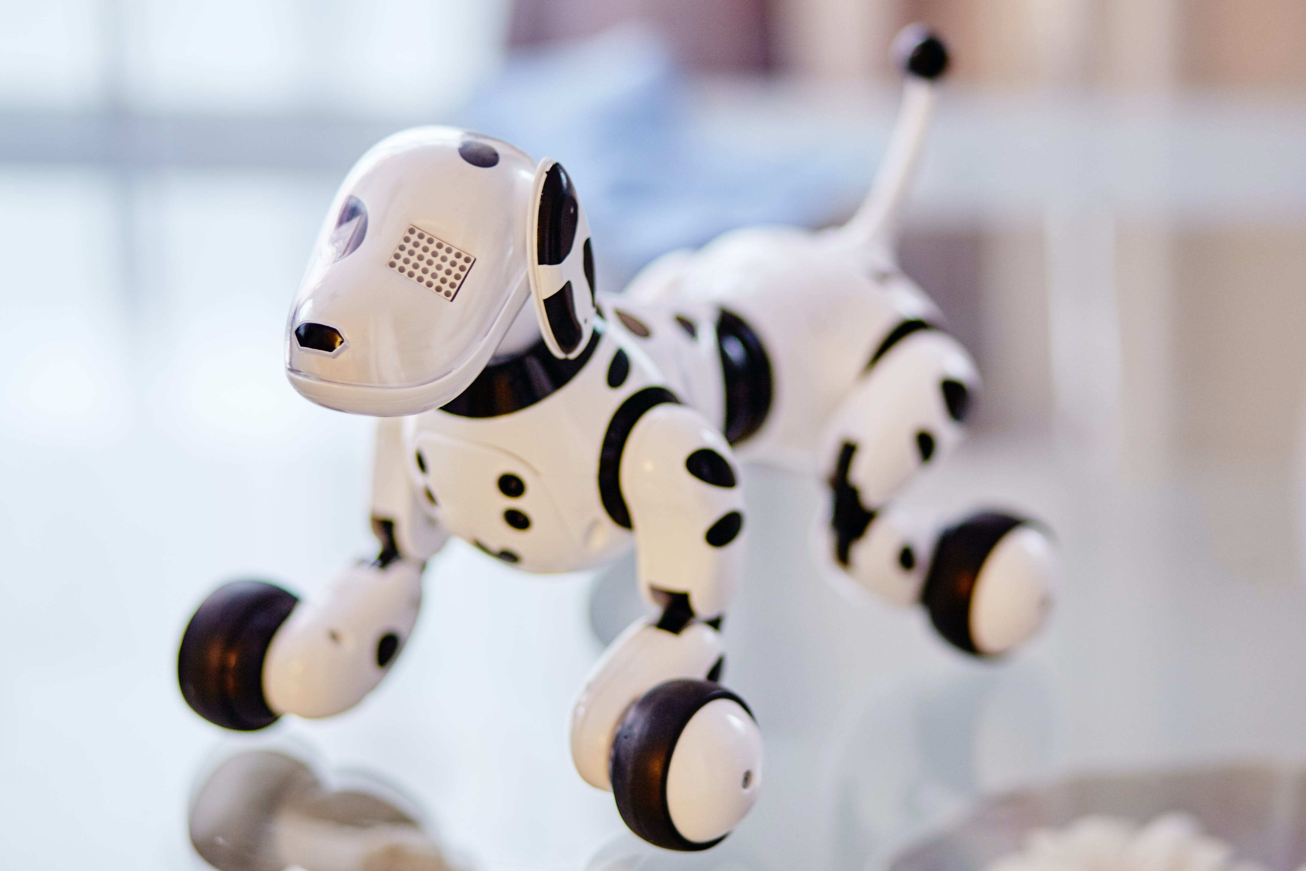White and Black Dog Robot on Clear Glass Table