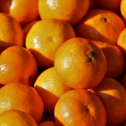 Základová fotografie zdarma na téma pomeranče