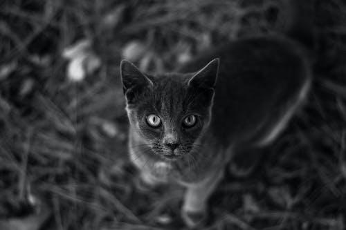Fotobanka sbezplatnými fotkami na tému 4k tapety, cicavec, domáce zviera, domáci