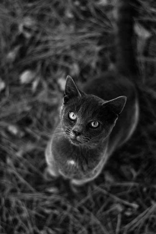 Starring Black Cat on Grass