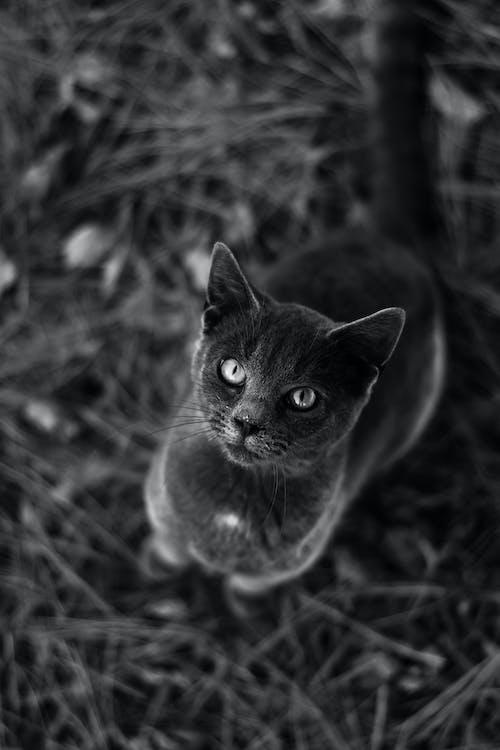 Fotobanka sbezplatnými fotkami na tému 4k tapety, cicavec, čierna a biela, čiernobiely