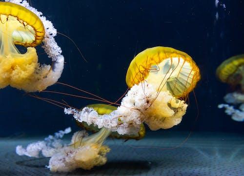 Close-Up Photo of Jellyfish