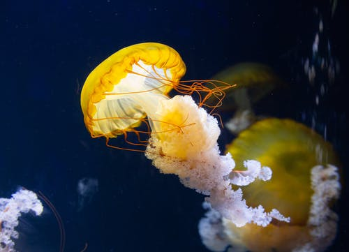 Close-Up Photo of Jellyfish