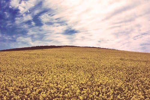 Foto profissional grátis de amarelo, área, céu, céu azul