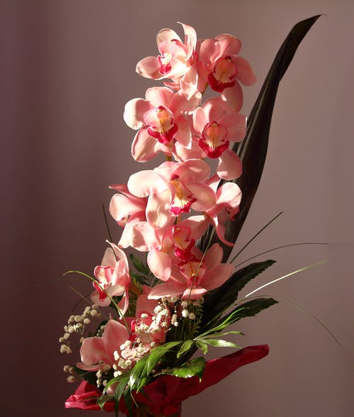 A Bouquet Of Pink Moth Orchids