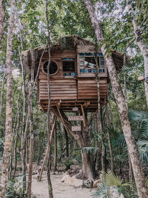 Brown Wooden Treehouse on Tree