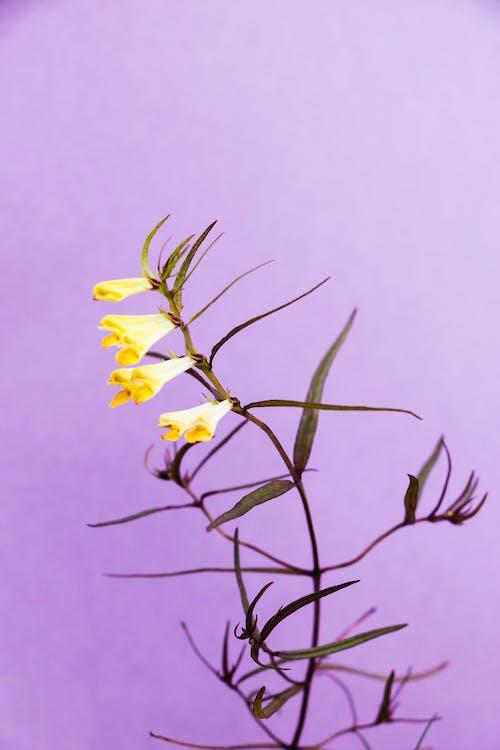 Kahverengi Ağaç Dalında Sarı çiçek