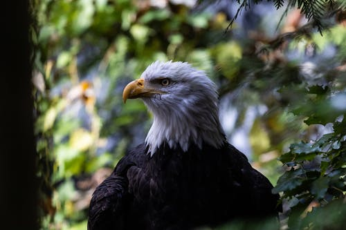 Close-Up Photo of Eagle