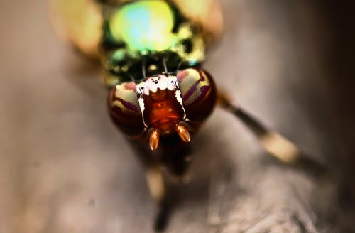 Free stock photo of abstract, canon, insects