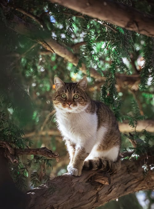 Brown and White Tabby Cat on Tree Branch