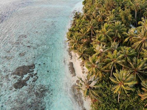 açık hava, ada, ağaç, ağaçlar içeren Ücretsiz stok fotoğraf