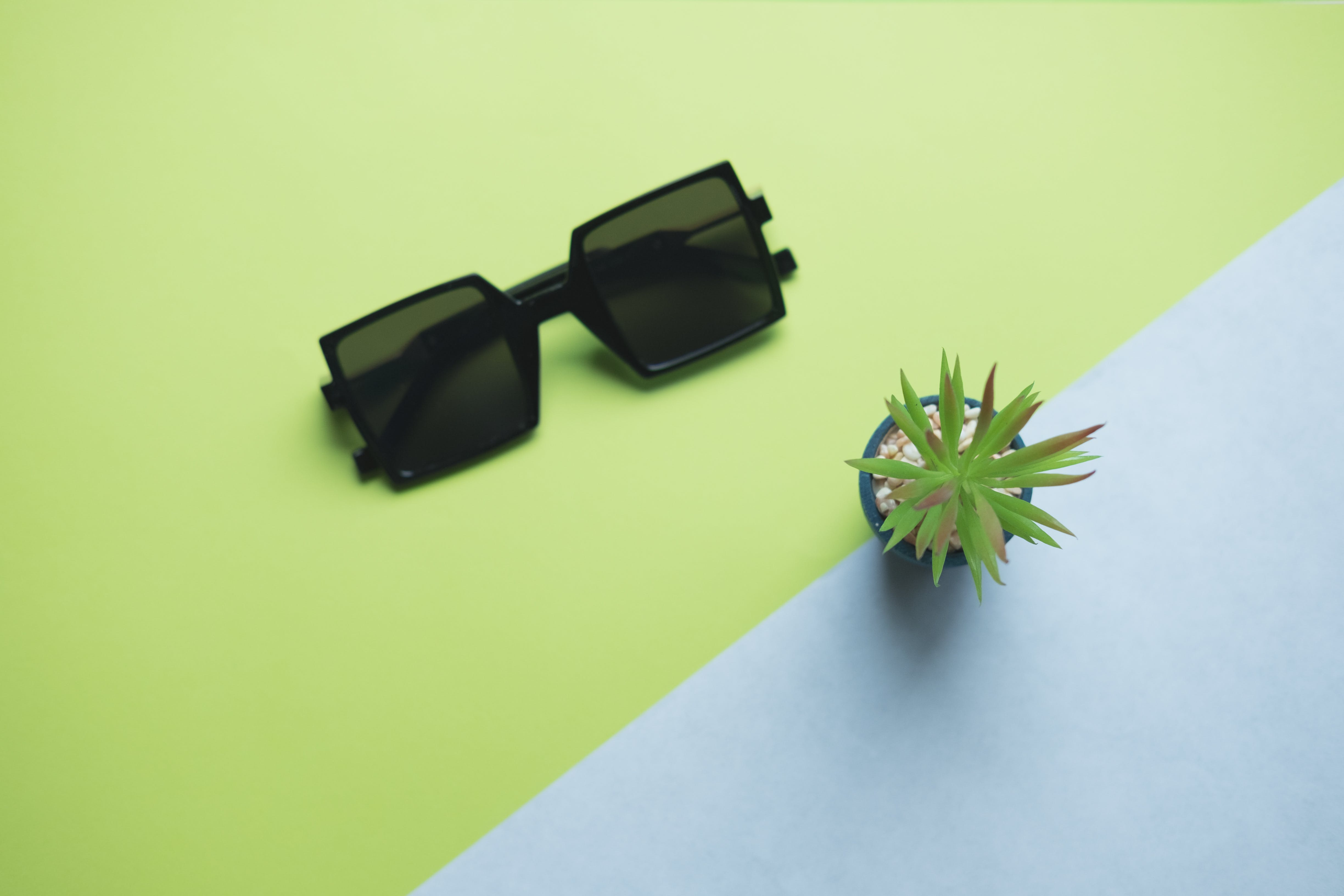 Black Sunglasses Beside Succulent Plant