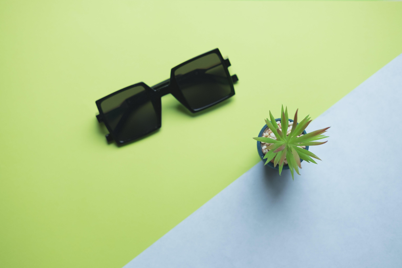 Black Sunglasses Beside Succulent Plant