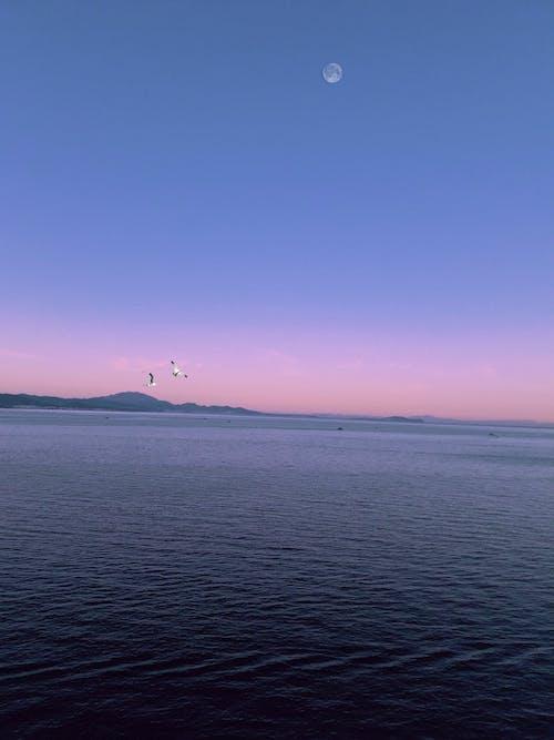 Free stock photo of beach, beautiful, beautiful sky, bird
