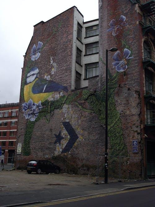 Free stock photo of bluetit, city art, graffiti