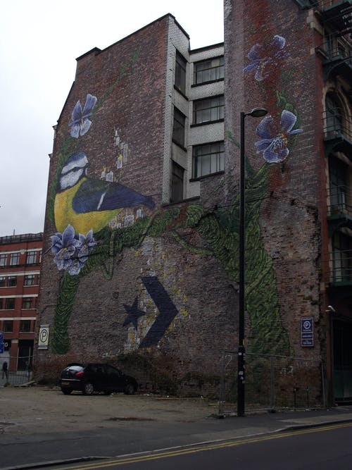 Free stock photo of bluetit, city art, graffiti, songbird