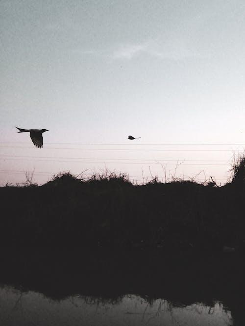 HD duvar kağıdı, kuş, siluet içeren Ücretsiz stok fotoğraf