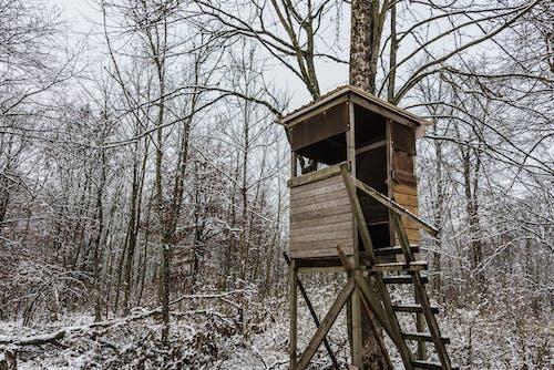 Fotos de stock gratuitas de abandonado, arboles, árboles desnudos, bosque