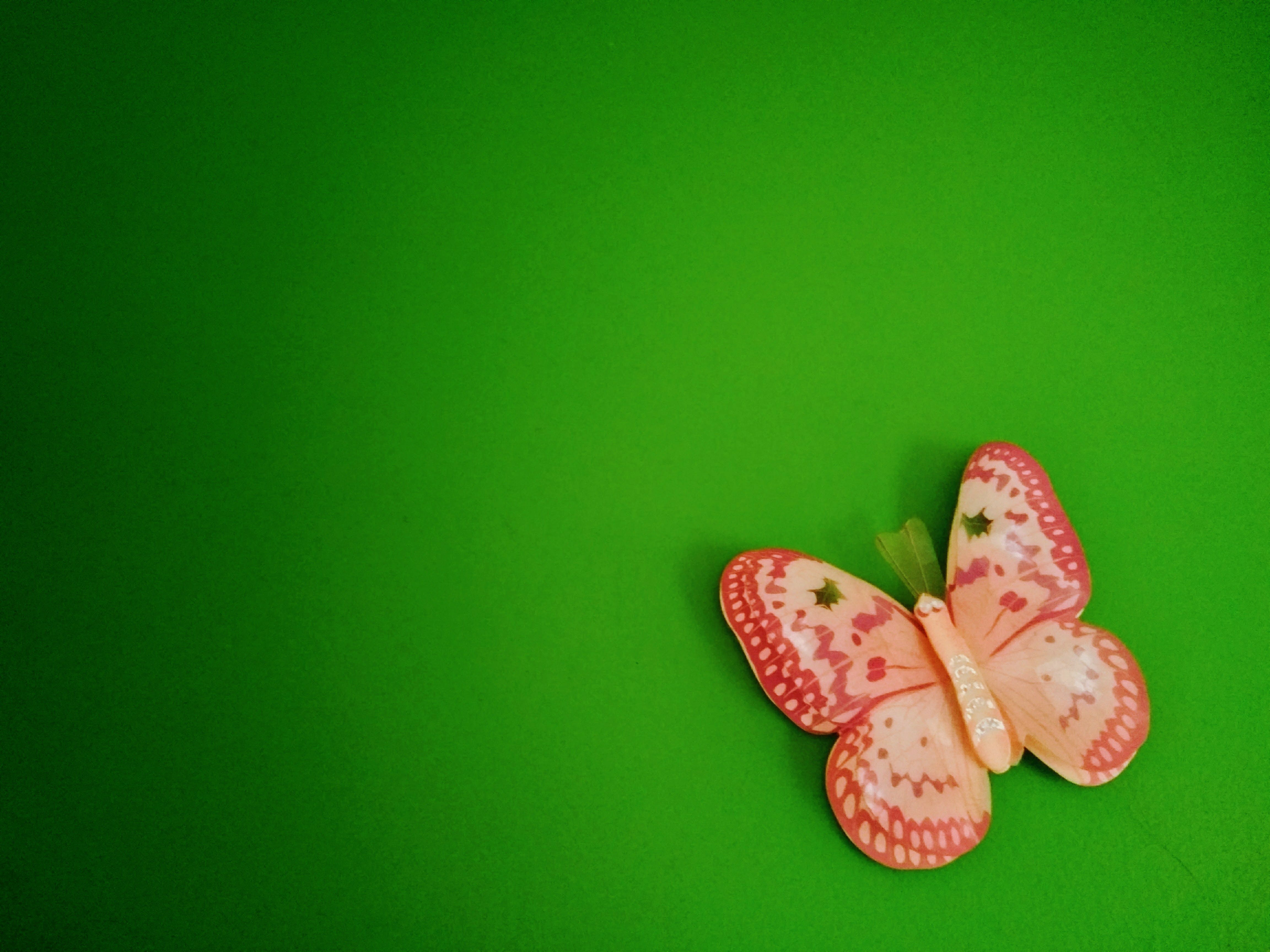 Free stock photo of butterfly, decoration, design, green
