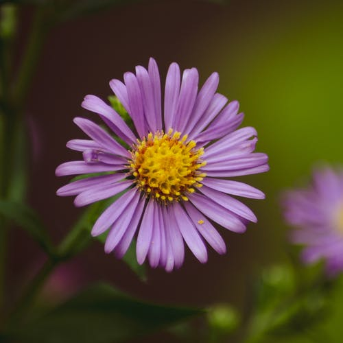 Close-up Photo of Purple Flower