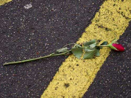 Free stock photo of broken heart, fallen rose, loss