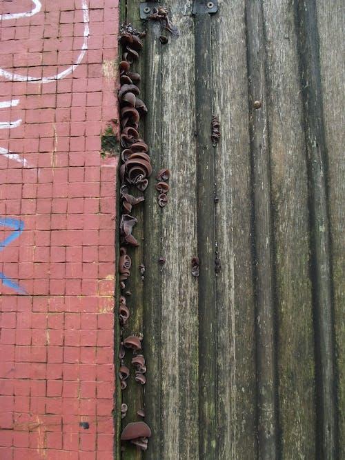 Free stock photo of brick wall, fungi, graffiti