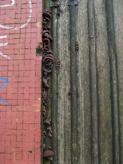 Free stock photo of brick wall, fungi, graffiti, urban decay