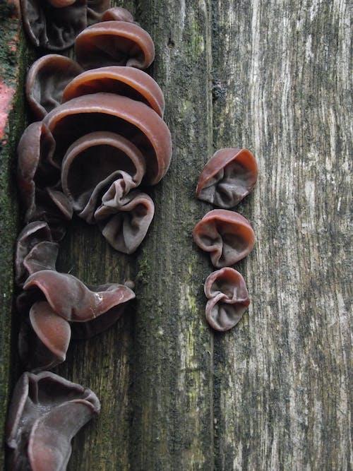 Free stock photo of fungi, urban decay