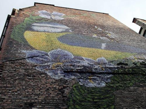 Free stock photo of bluetit, graffiti, street art