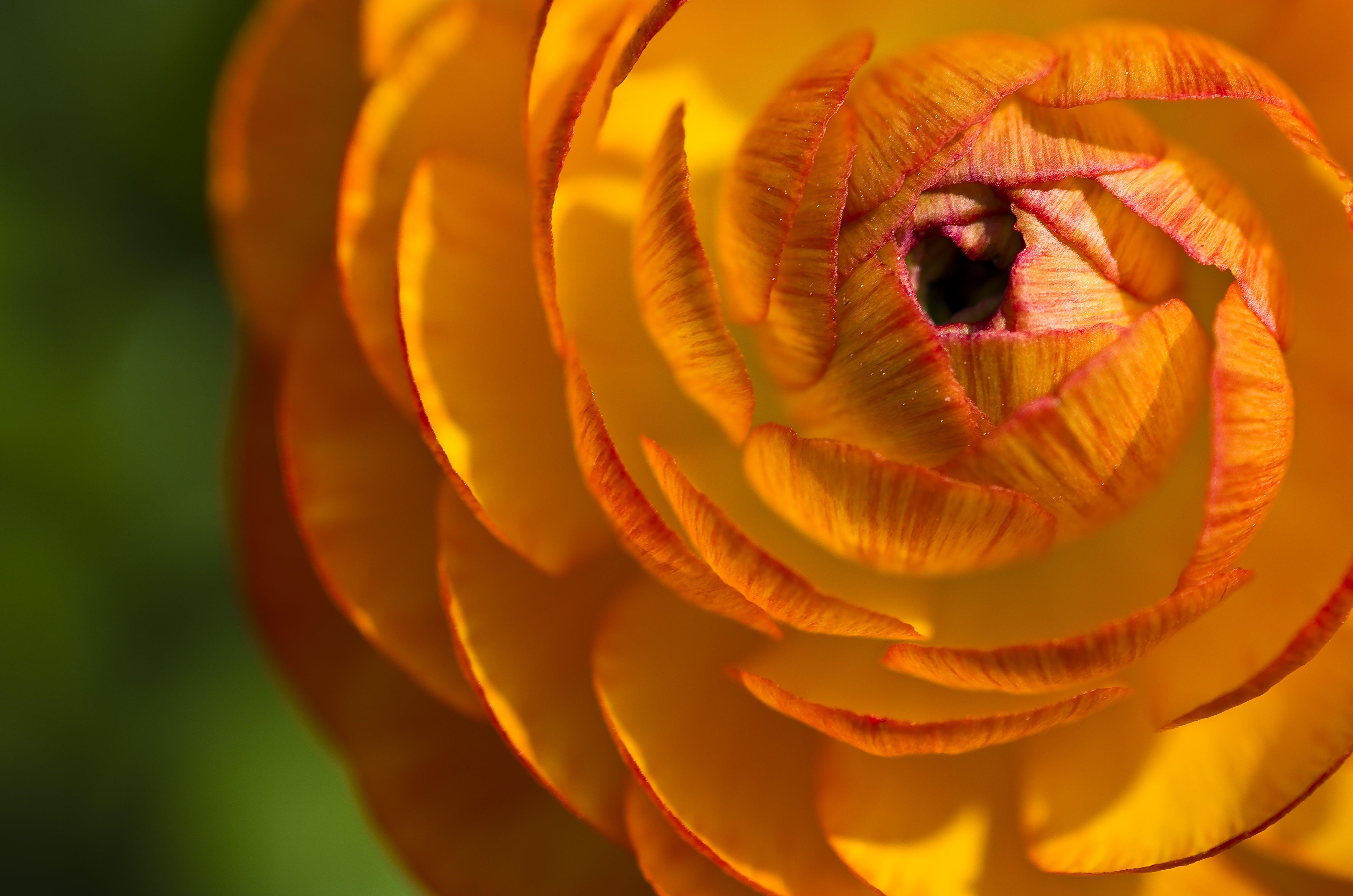 Yellow and Orange Flower Macro Photograph
