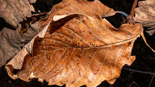 Free stock photo of leaf, texture