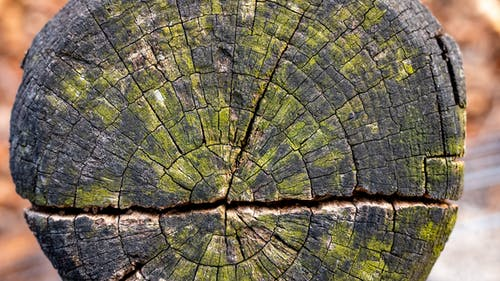 Free stock photo of post, stump, texture, wood