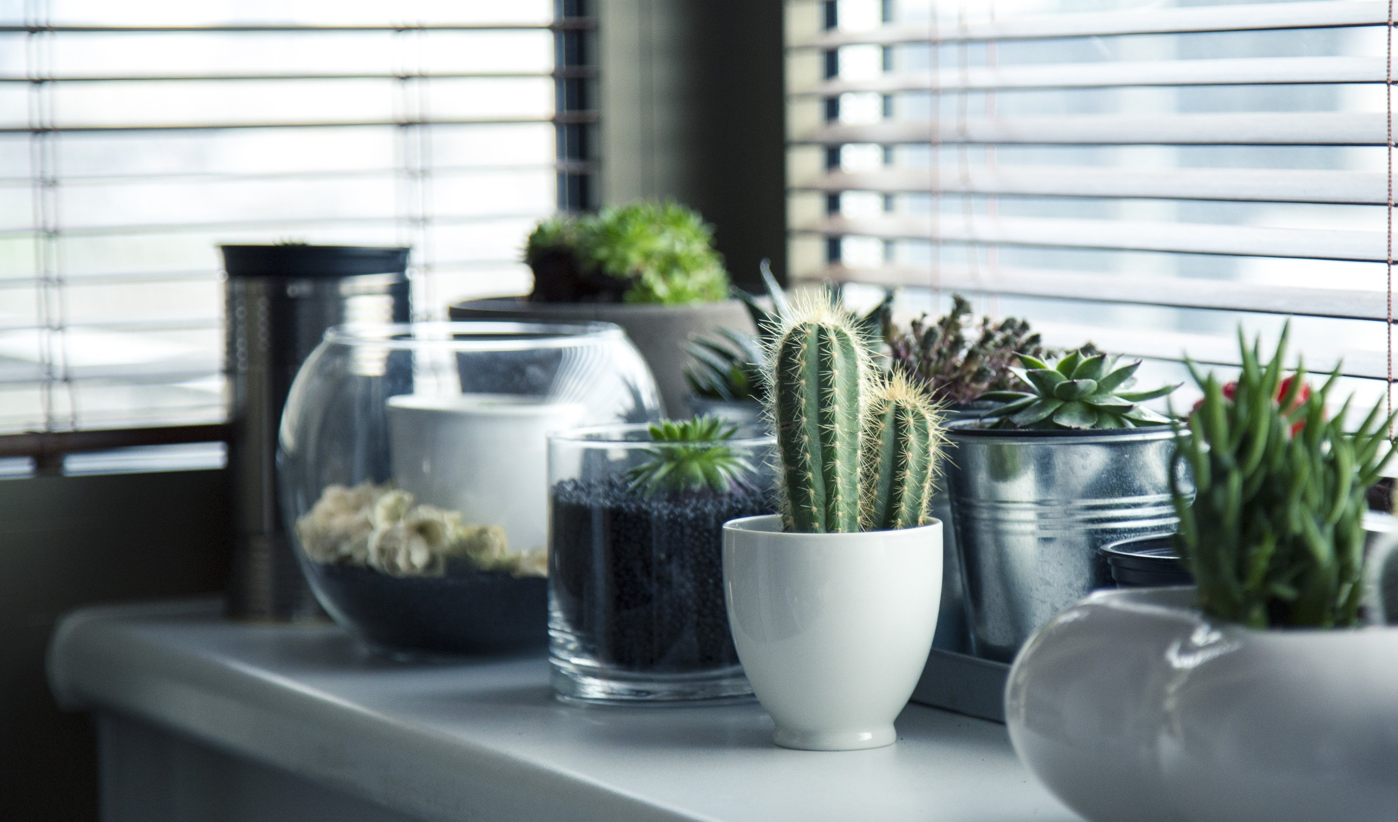 Cactus Plant on Top White Table