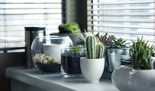 table, plants, window