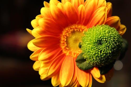 Fotobanka sbezplatnými fotkami na tému detailný záber, flóra, HD tapeta, kvet ovocného stromu